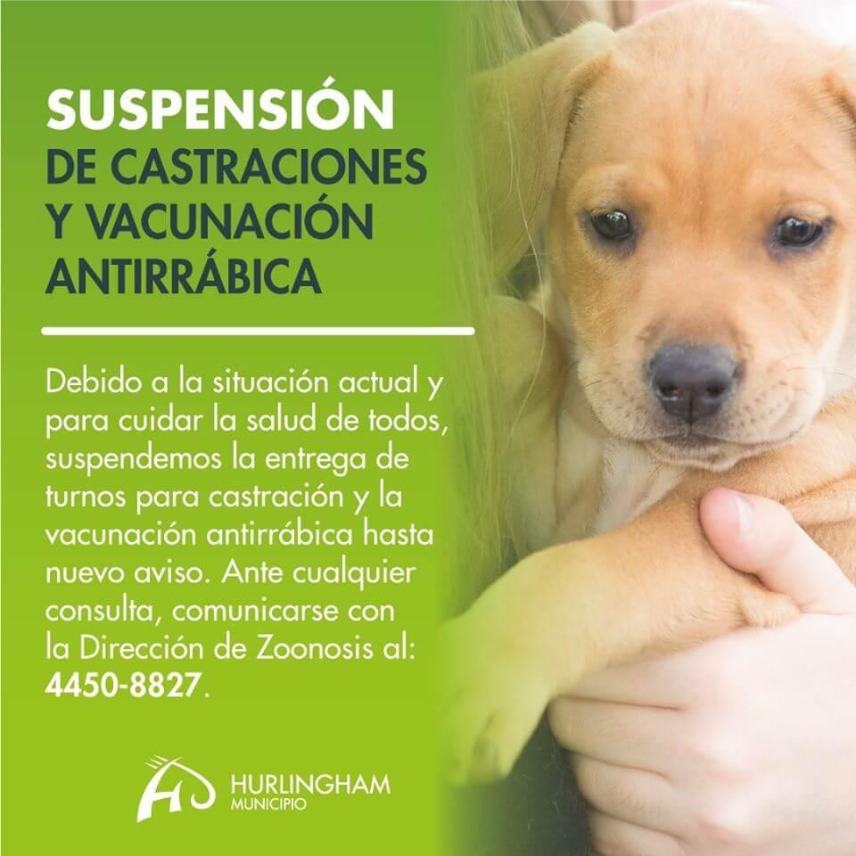 Suspensión de castración - Coronavirus (covid19) y dengue en Hurlingham - Municipalidad de Hurlingham